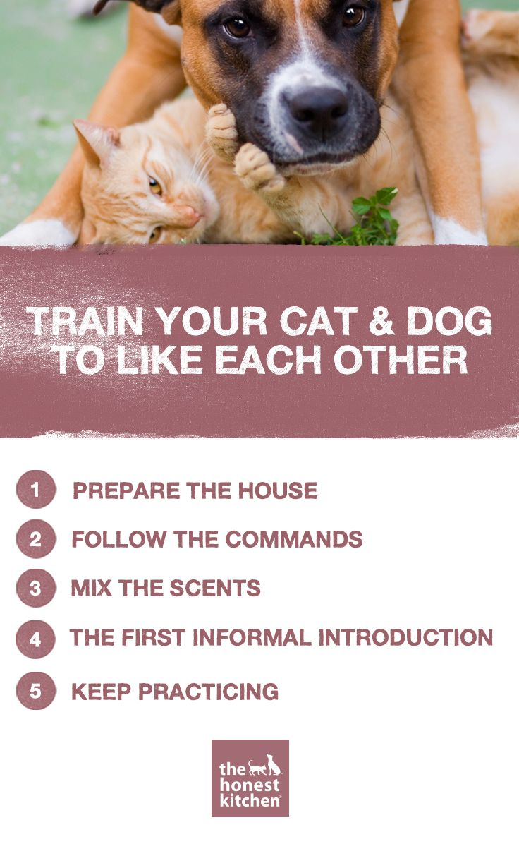 How To Train Your Dog And Cat To Like Each Other Dog Cat