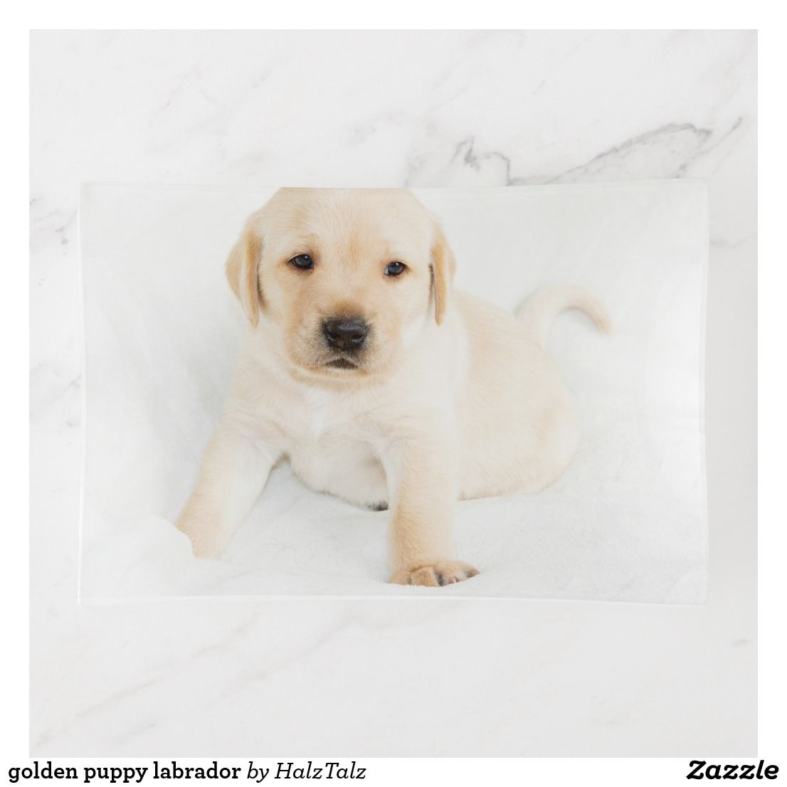 Golden Puppy Labrador Trinket Trays Zazzle Co Uk Golden Puppy Labrador Puppies