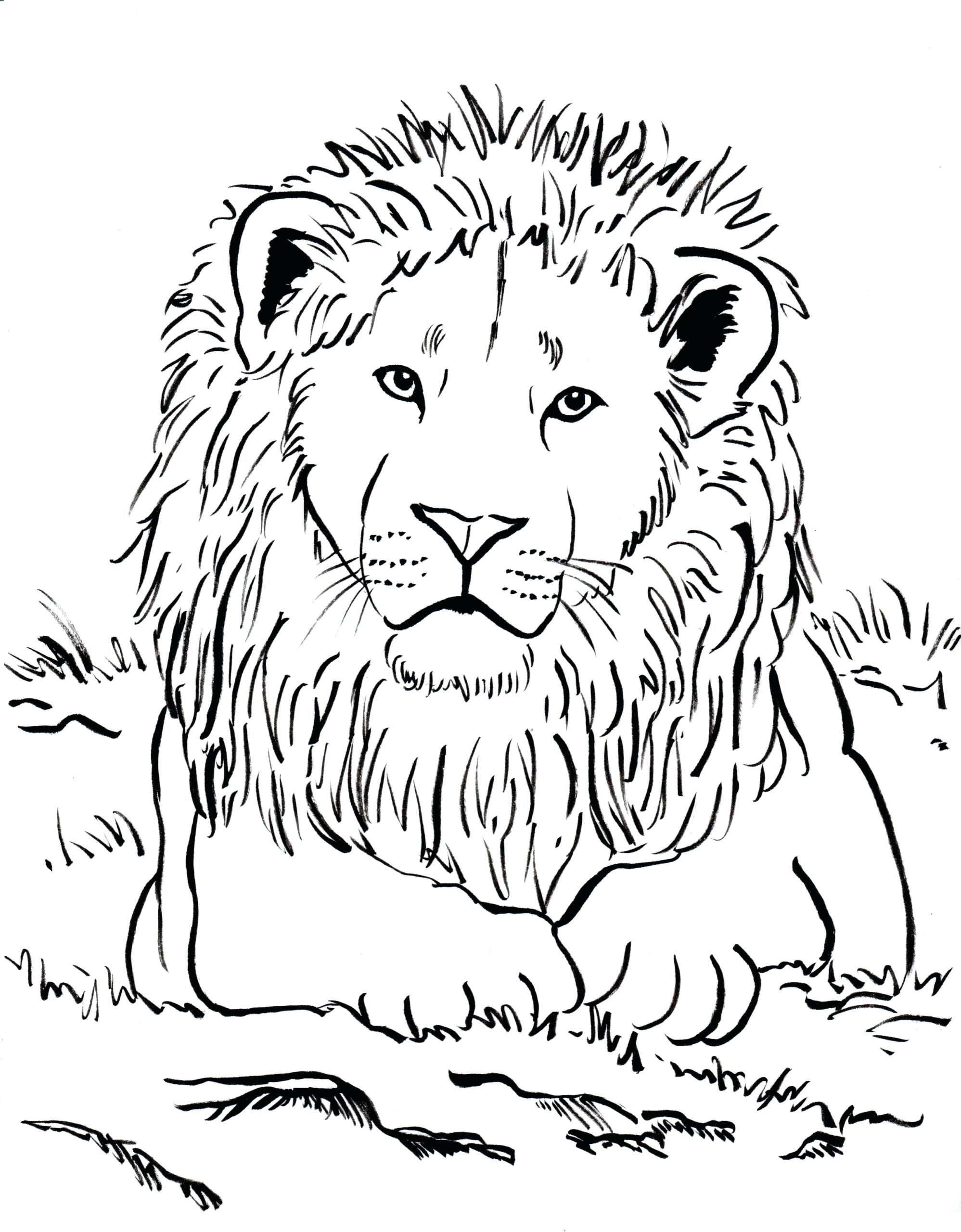 Lion Head Coloring Page Youngandtae Com Animal Coloring Pages Lion Coloring Pages Cartoon Coloring Pages