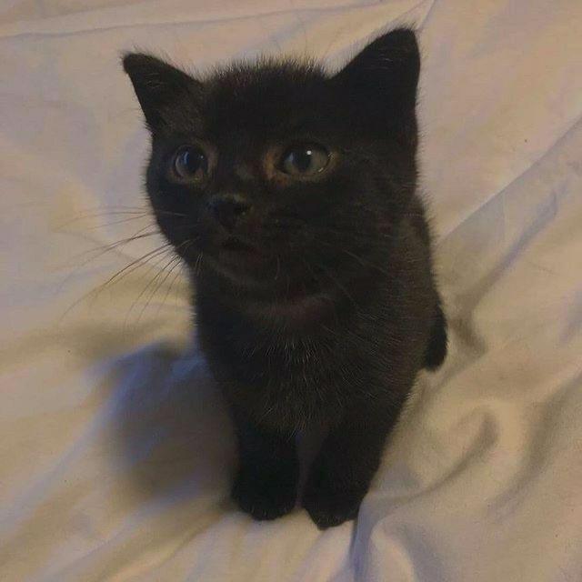 Gats おしゃれまとめの人気アイデア Pinterest Rabbitthots ペット 面白いペット 可愛い猫