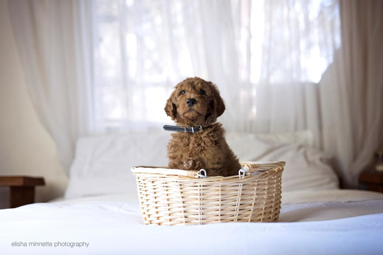 Photo Shoot With New Puppy