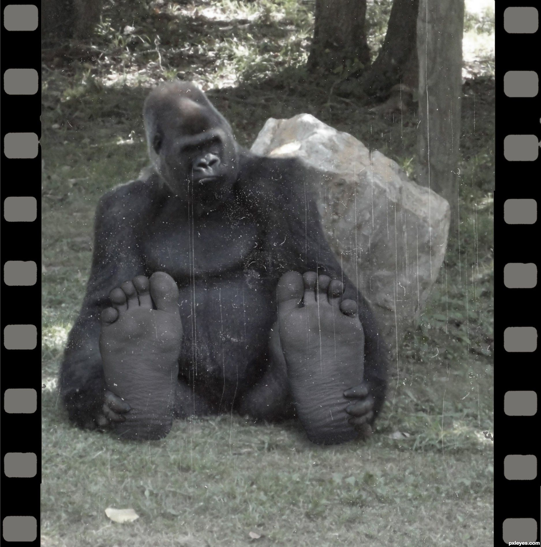 Big Foot Photoshop Contest 18763 Pictures Page 1 Bigfoot Real Bigfoot Photoshop