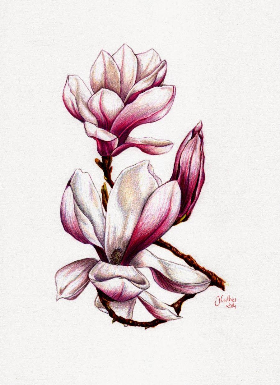 magnolie buntstift a4 jana luther eigene arbeiten. Black Bedroom Furniture Sets. Home Design Ideas