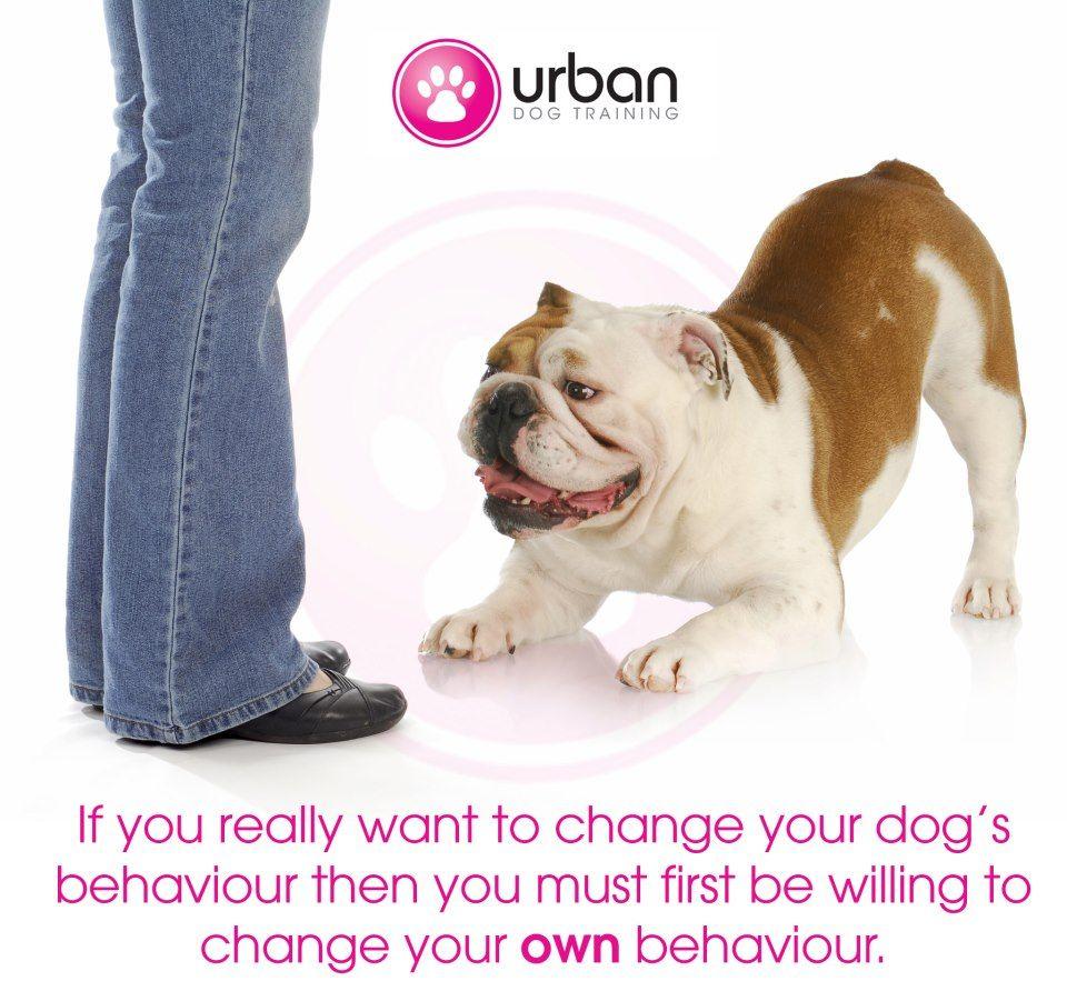Change your behavior? Urban dog, Dog behavior, Puppy love