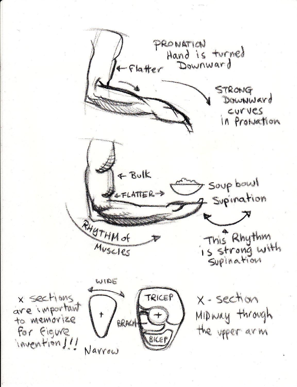pronation supination 1 | Anatomy reference | Pinterest | Anatomy ...