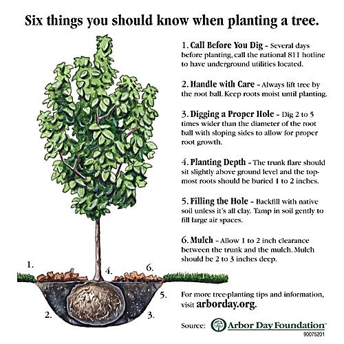 6 things to know when planting a #tree.