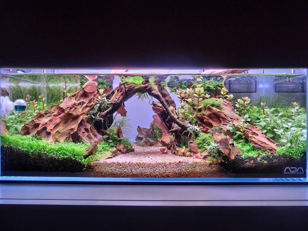 Amazing Clean And Clear Dragon Stone Aquascape Layout Aquascape Aquarium Amazing