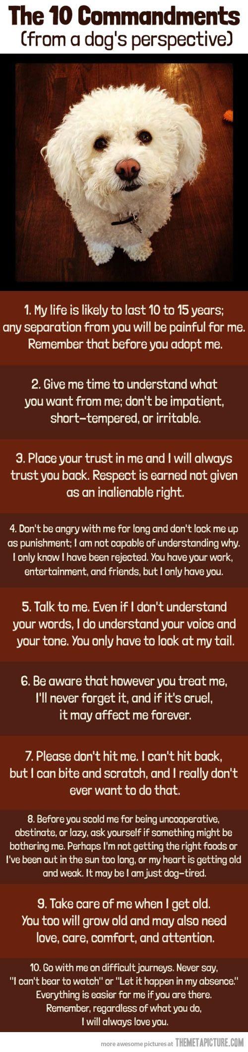 cool-commandments-dog-perspective-rules