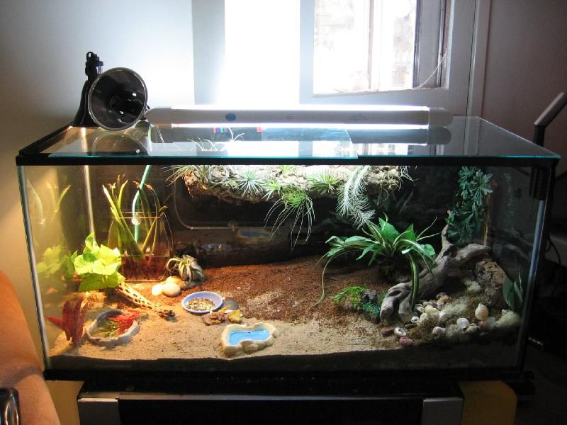Hermit Crab Habitat | Hermit crabs | Pinterest | The o ...