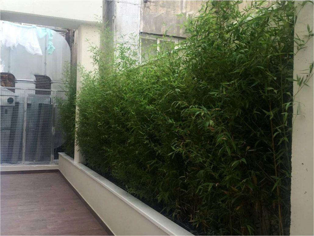 Seto de bamb en terraza realizada por jardines y rincones for Paisajismo terrazas