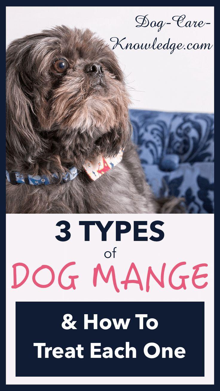 3 types of dog mange you need to know now dog mange