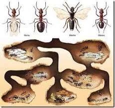 Schablone Ameise auf A4