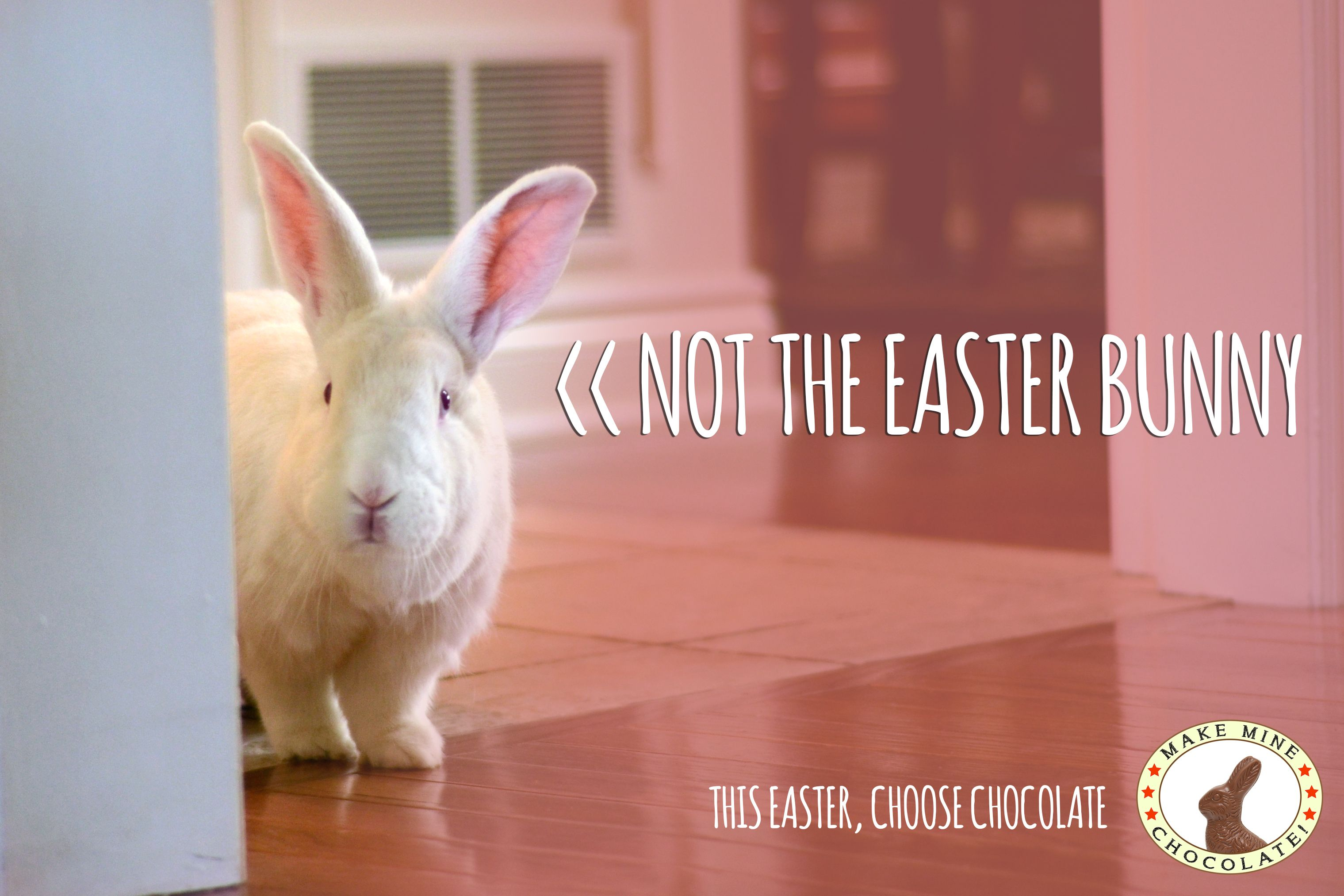Belinda Says Real Bunnies Are Not For Easter We Agree With Her Rabbit