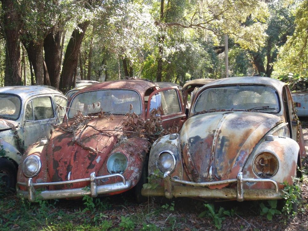 Save these Bugs: Dade City, Florida | VW-Audi Love