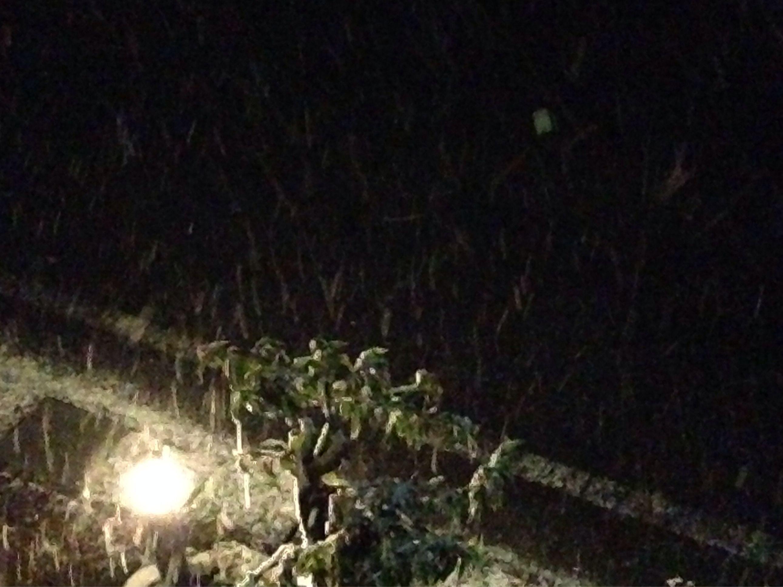 #彦根 からおはようございます(^O^)/ ついに彦根でも初雪が降りました‼︎ まだまだ降り続きそうなので、ある程度は積もるかも知れませんね。しかし寒い(>_