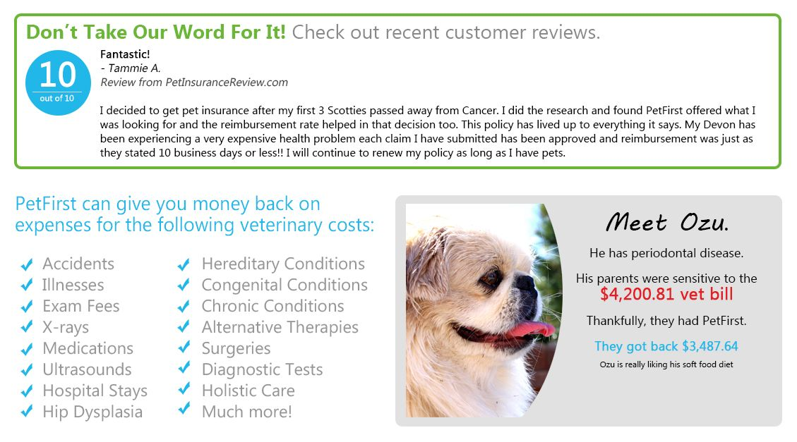 Get A Quote Petfirst Pet Insurance Pet Insurance For Dogs