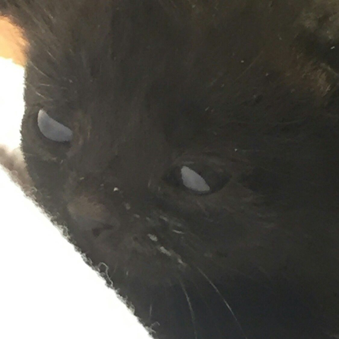 Eli Powe Hubbard He Has A Little Milk On His Face Here Oh My Is He Cute Though 5 18 16 Kitten Cute Animals