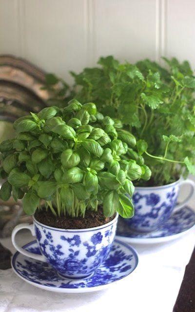 Grow Basil Indoors In A Vintage Teacup Vegetable Gardening Diy Herb Garden Herbs Herbs Indoors