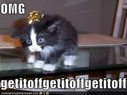 I can't stop laughing...mostly b/c i did this to my cat one time and she had the same look on her face!!