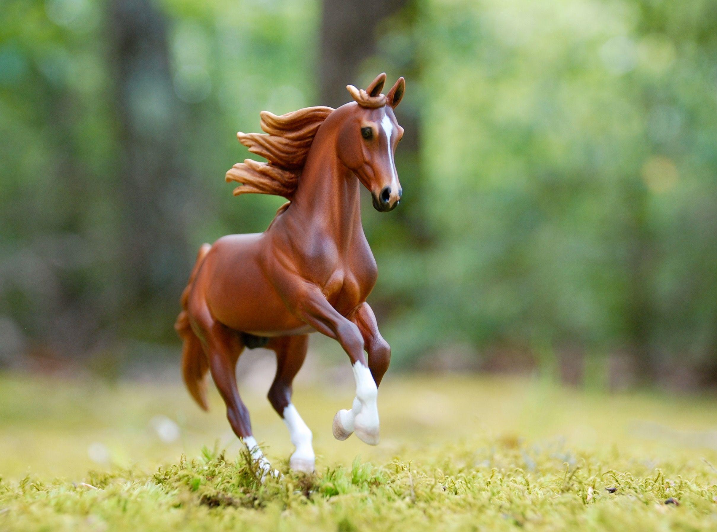 картинки лошадей брейер на природе фото камеры, правда