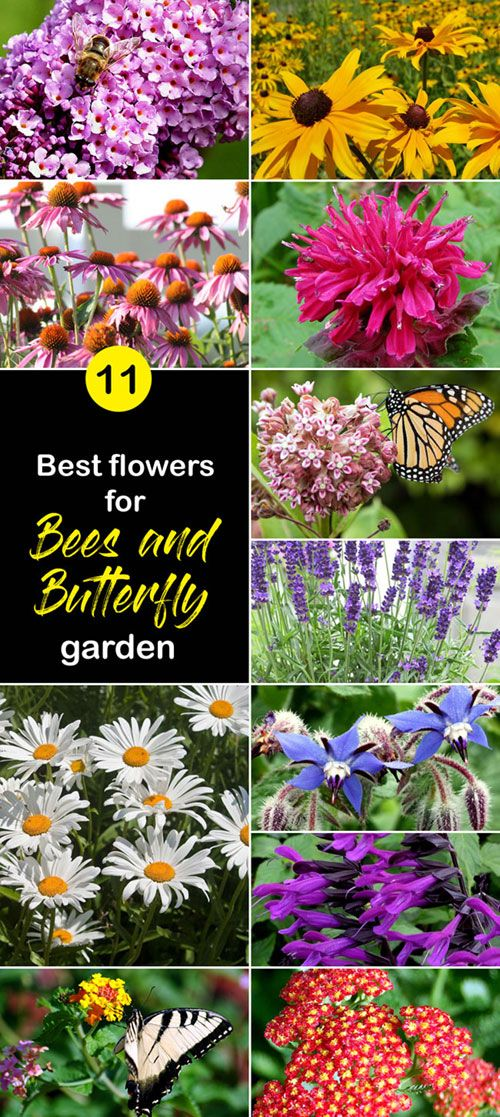 Best Flowers For Bees And Butterfly Garden Pollinator Garden Naturebring Best Flowers For Bees Butterfly Garden Plants Flower Landscape