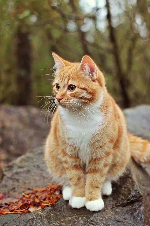 Orange Lovely Cute Cats Cute Cat Gif Kittens