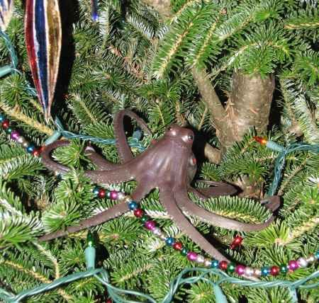 Christmas In Octopus Garden >> Is The Pacific Northwest Tree Octopus Endangered Random Stuff