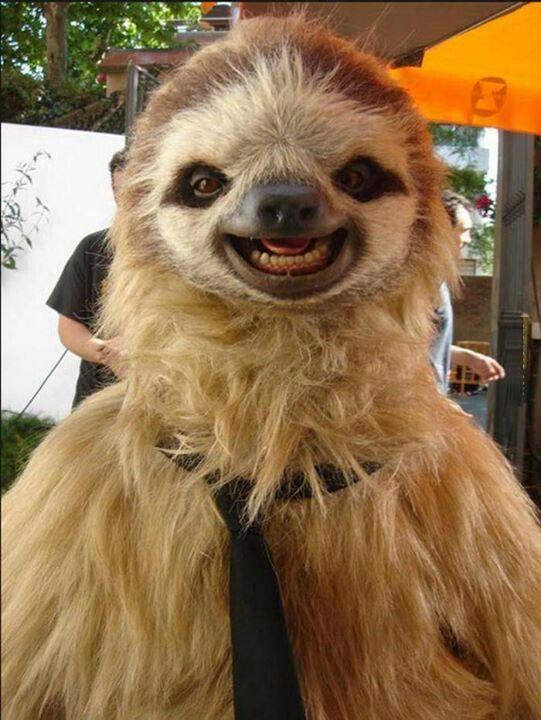 Oso Perezoso Riendo Cute Animals Animales Sonrientes