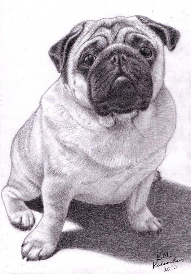только картинки как нарисовать собаку мопса можно узнать