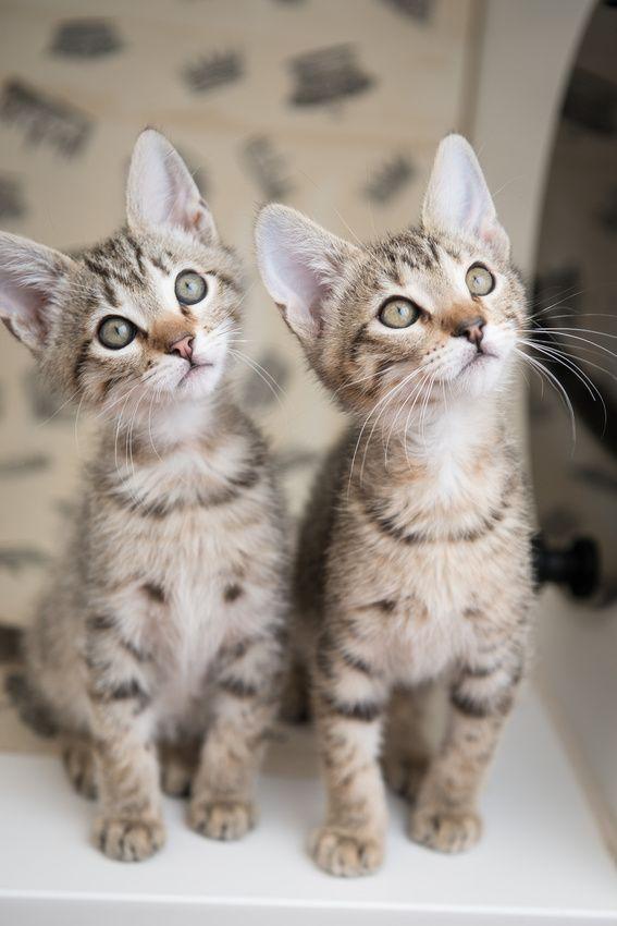 Twinssss