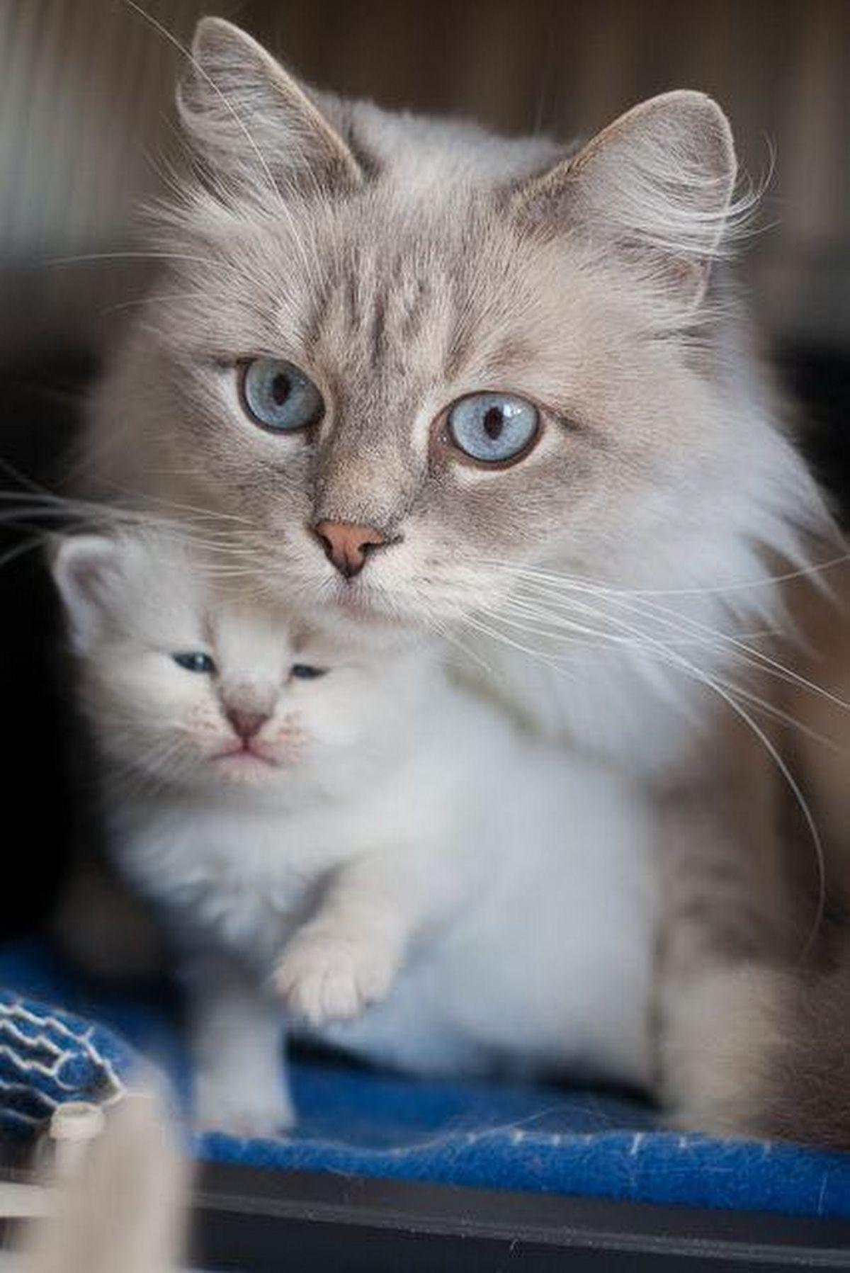 Pin von Melanie Kremer auf Raubtiere Katzen, Haustiere