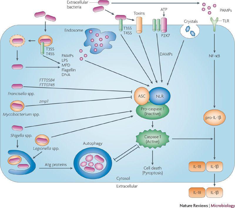 Pin Em Immunology
