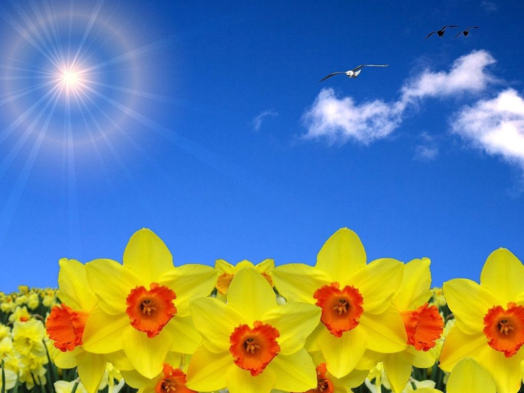 Field Of Spring Flowers The Season Of Sunshine Spring And