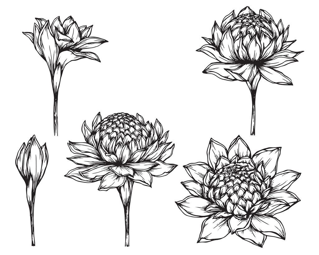 Pin By Kajol Mehta Designs On Sketch Outlines Torch Ginger Flower Flower Drawing Ginger Flower
