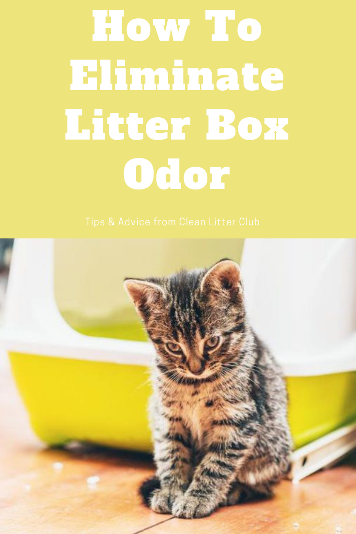 How To Eliminate Litter Box Odor Clean Litter Club Litter Box Cat Litter Odor Litter Odor