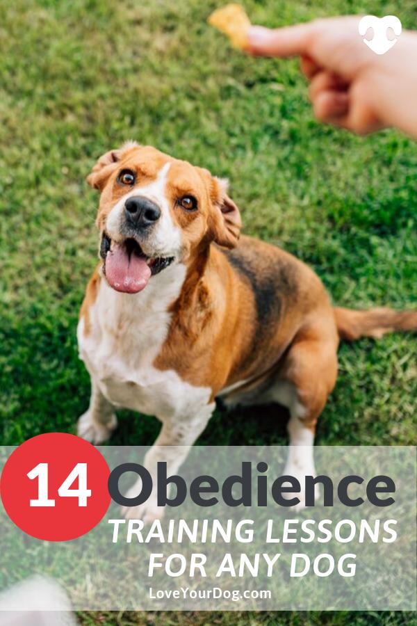 Pin On Dog Tips Training
