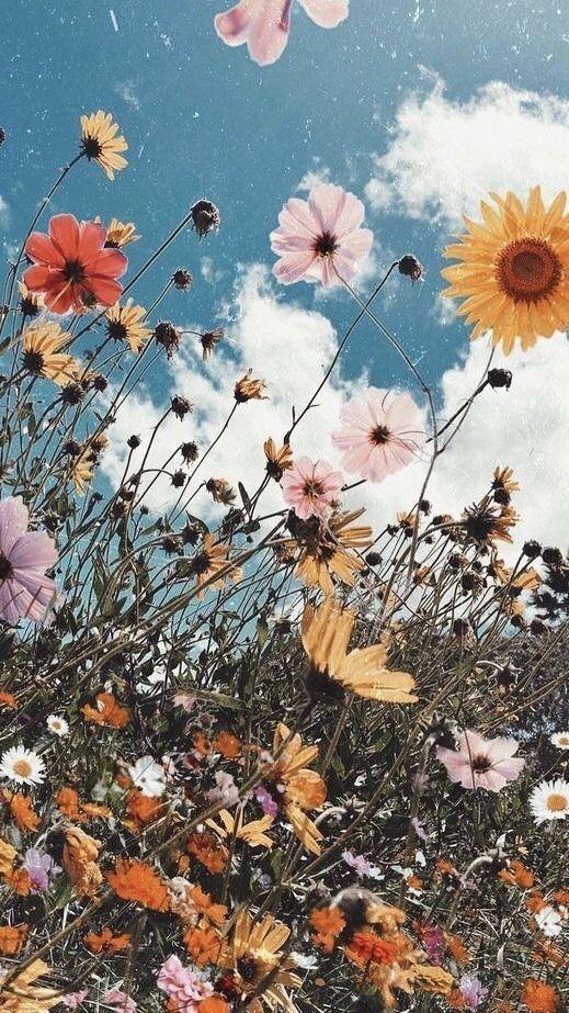 samsung Hintergrundbild Bild #Bild #Hintergrundbild #samsung, #Bild #Hintergrundbild #Plant...