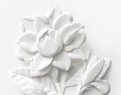 Consulta este proyecto behance paper sculpture white thai consulta este proyecto behance paper sculpture white thai flowers https mightylinksfo