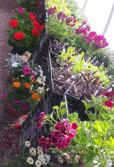 More Images For Agua Fria Nursery New Mexico S Home Directory