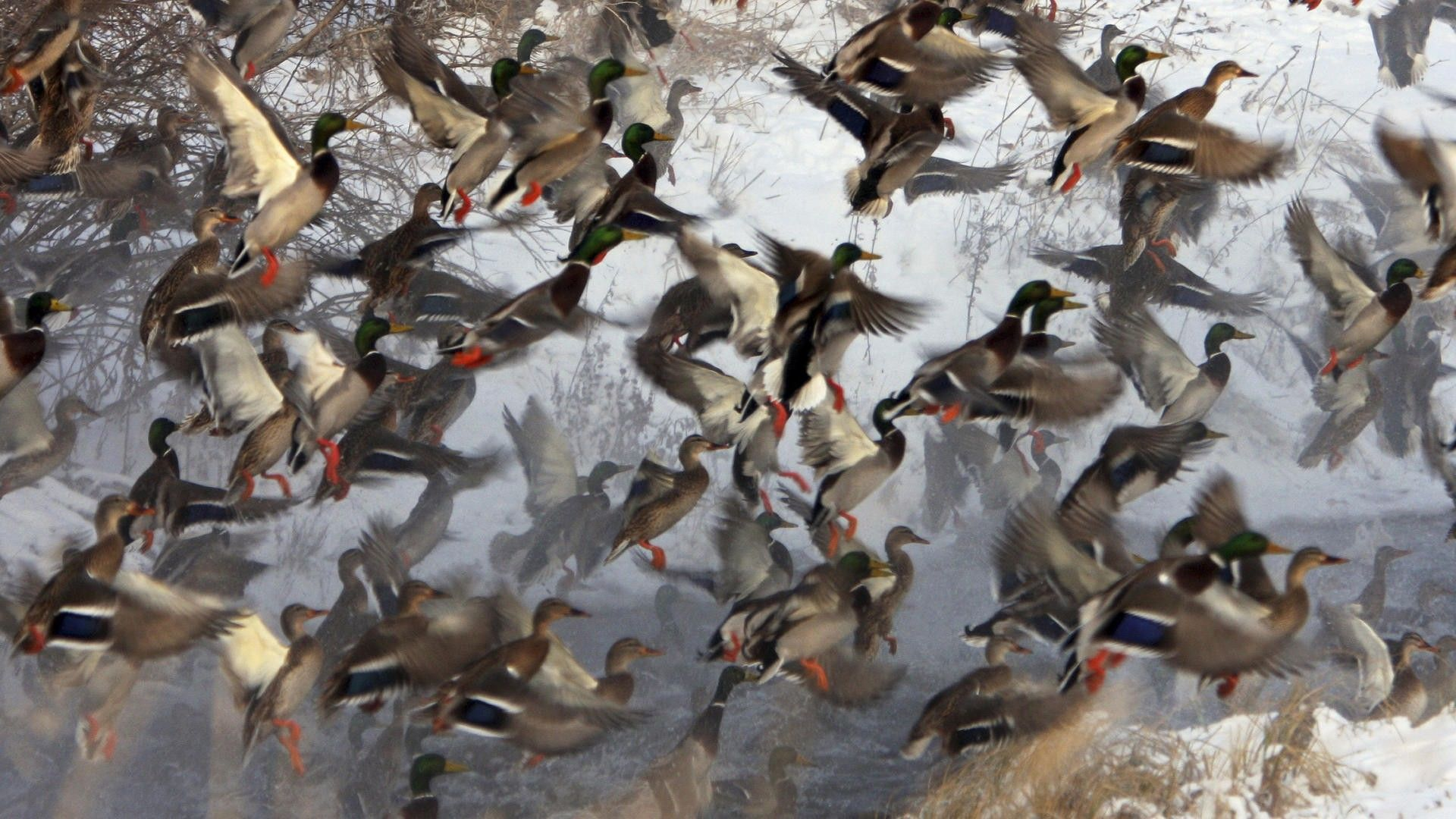 Duck Hunting Backgrounds Google Search Duck Hunting Hunting Backgrounds Hunting