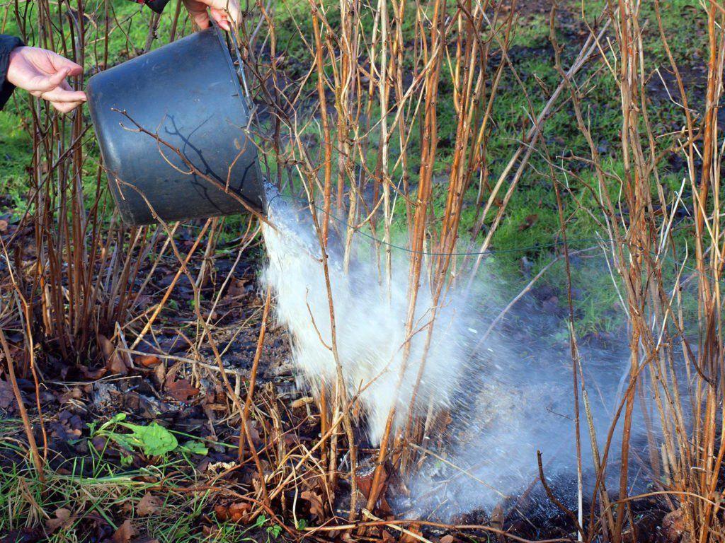 Asche Als Dunger Anwendung Von Holzasche Im Garten Asche Als Dunger Pflanzen Garten