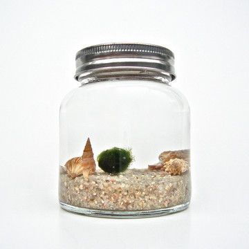 WANT! A pet marimo lol. Marimo Jar Aquarium Big featured on Fab.