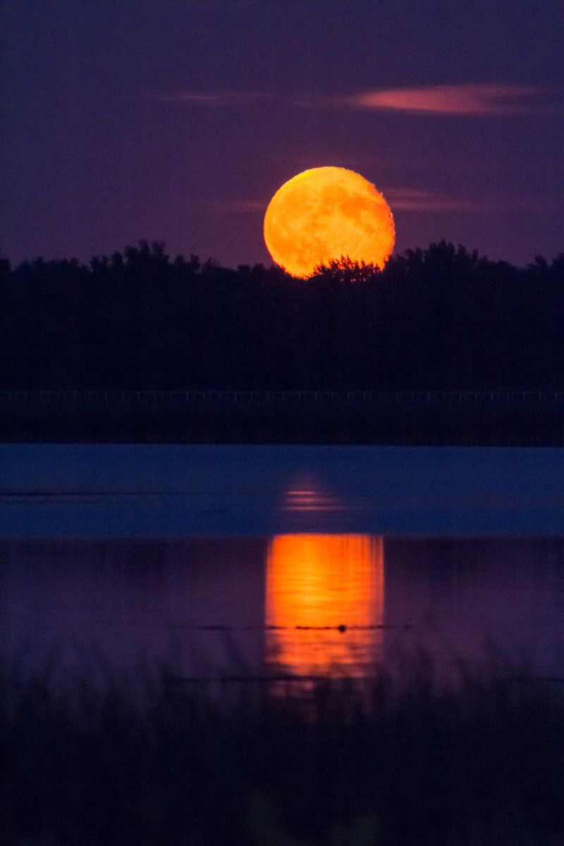 Autumn Harvest Moon Rising | Fall | Moon, Moon pictures, Beautiful moon