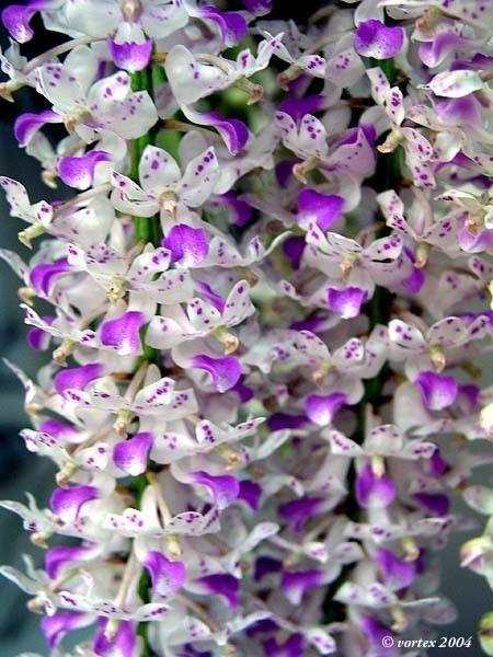 primavera-garden-orquidea-vanda-decoracao-floral-278660