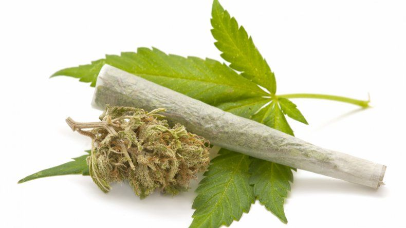 #¿La marihuana afecta al cerebro y al corazón? - LMNeuquen.com (Registro): LMNeuquen.com (Registro) ¿La marihuana afecta al cerebro y al…
