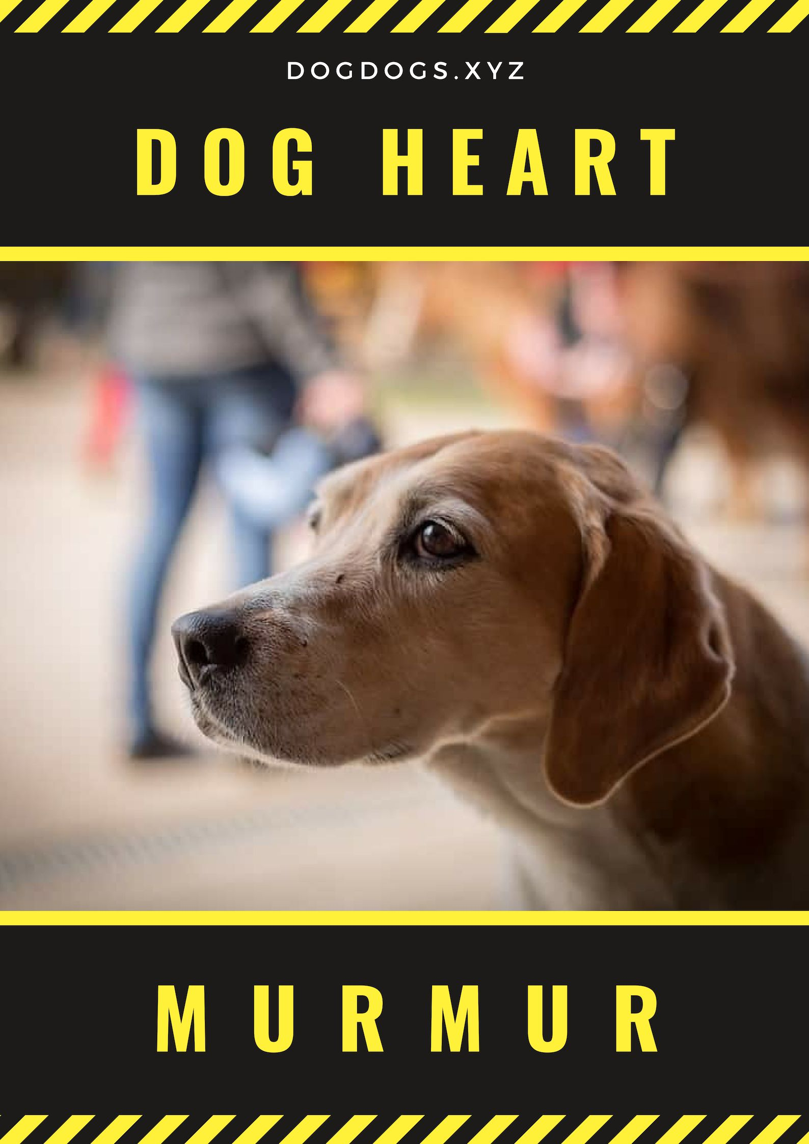 While Many Dogs Have An Acquired Heart Defect Or Murmur At Birth
