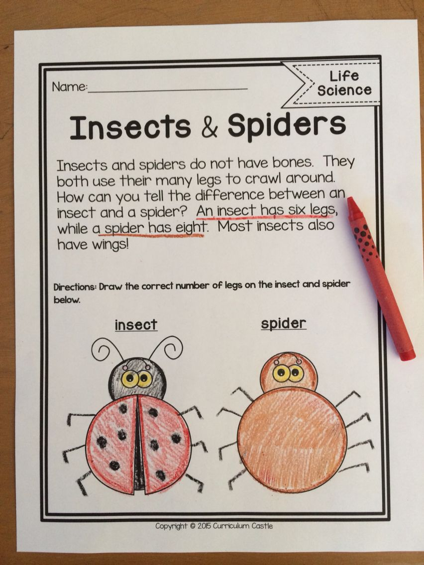 Life Science Non Fiction Reading And Comprehension Activities Download This Insects And Sp Reading Comprehension Passages Third Grade Activities Comprehension [ 1136 x 852 Pixel ]