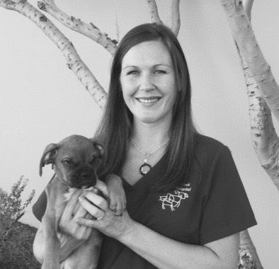 Meghan is an Arizona native from Cave Creek. She joined Pinnacle Peak Animal Hospital in April 2006. Meghan has had a love for animals from a young age. She has a special interest in veterinary dentistry and enjoys assisting Dr. Bates. In her free time, Meghan enjoys being outdoors hiking and camping.  #ppah #pinnaclepeakanimalhospital #pinnaclepeakvet