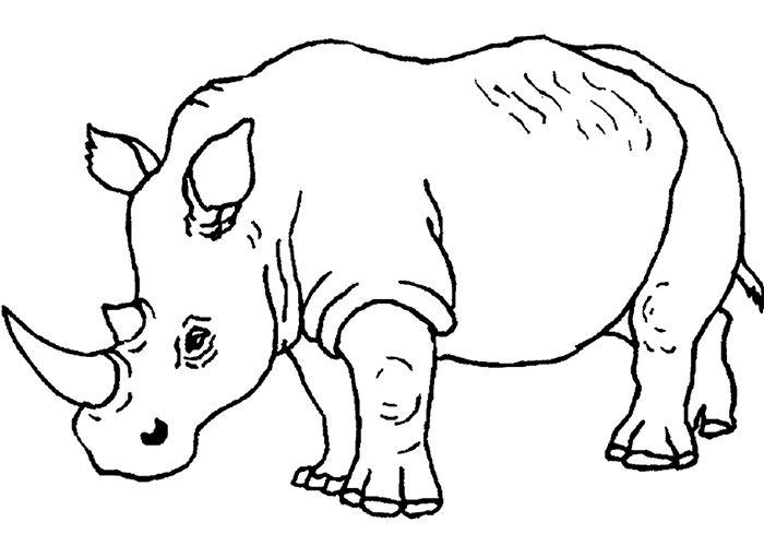 crashing rhino Colouring Pages | African Safari | Pinterest | Rhinos