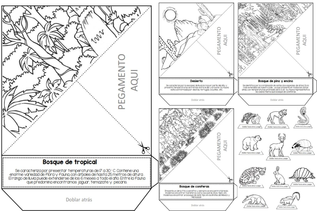 Maravilloso triorama de ecosistemas | Educación Primaria | Aprender ...